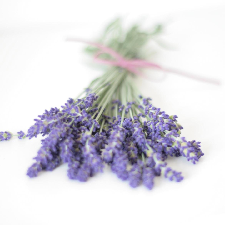 Lavendelbund_1170